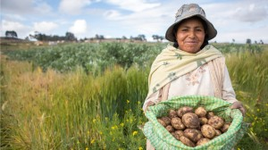Nicanora in Bolivia holding her harvested potatoes in a bag