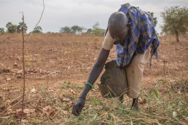 Picking wild leaves to eat South Sudan David Mutua.jpg