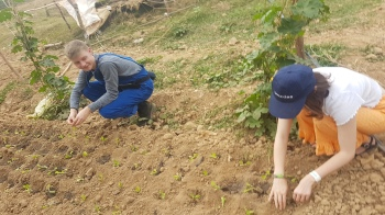 Orla and Hugh working with local farmers to plant lettuce on one of the farms that CAFOD supports